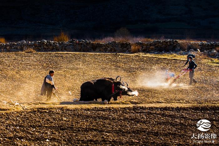 第十一届西藏珠穆朗玛摄影大展获奖作品揭晓!