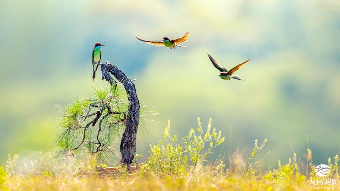 2019年英国年度鸟类摄影奖入围者名单公布